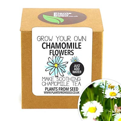 Gifts for Tea Lovers: Chamomile Kit