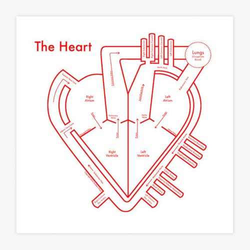 The Heart Diagram