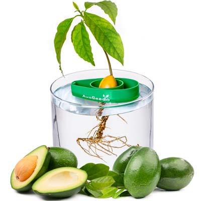 Gifts for Avocado Lovers - Avo Seedo